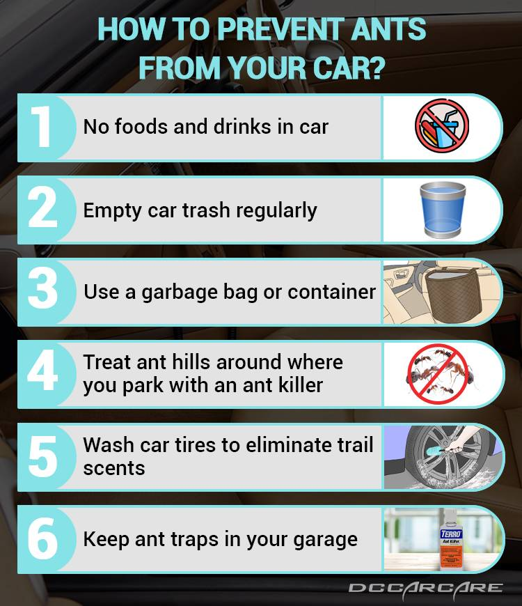 Prevent ants from your car